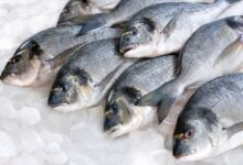 صورة أهم فوائد تناول السمك.. يقوي المناعة في الشتاء